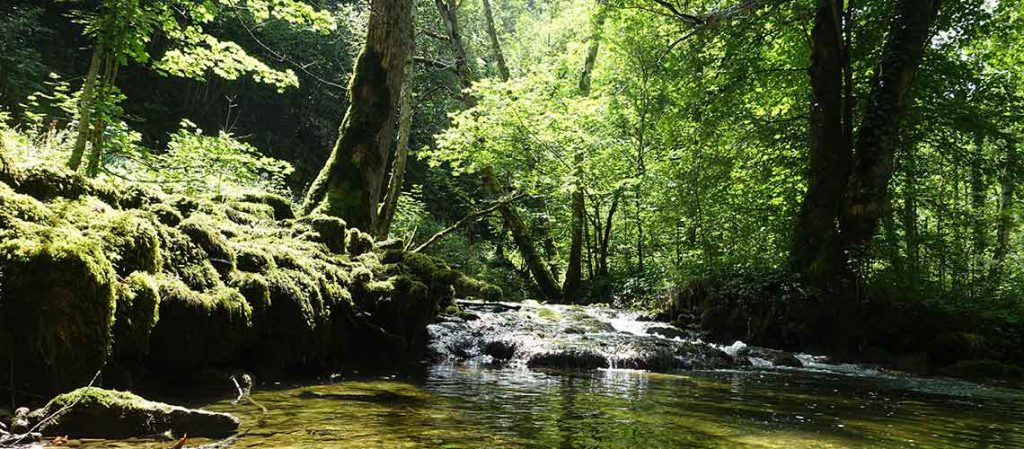 Bild: Flusslandschaft, Taufe, Willkommensfeier an einem Bach
