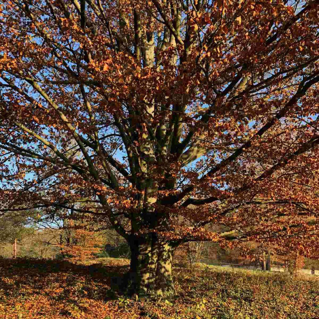 grosser Baum Baumgrab