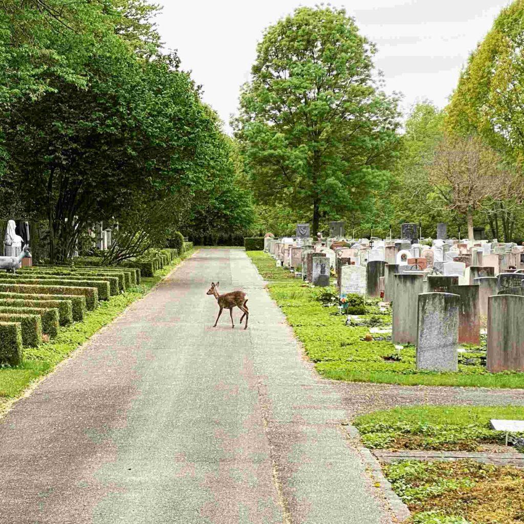 Freizeitpark Friedhof